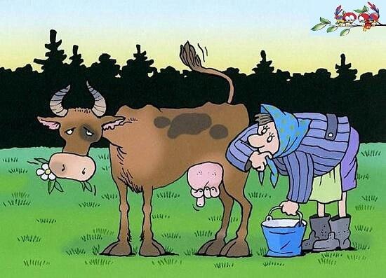 Анекдоты про корову