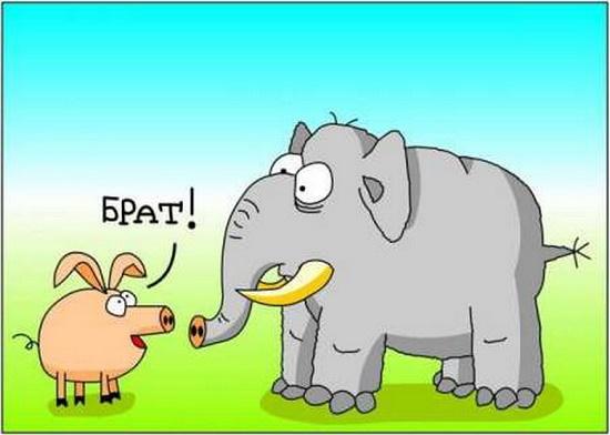 анекдот про слона