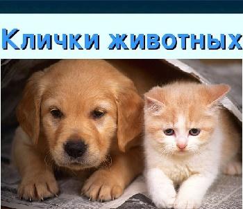мужские клички домашних животных