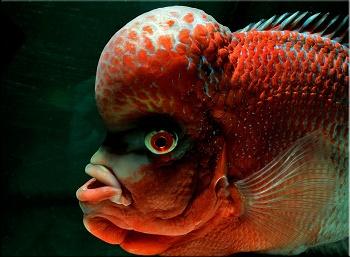 Смешные и необычные названия рыб