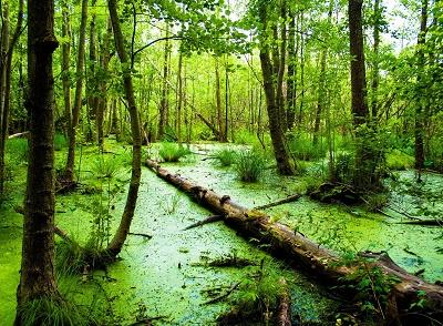Пословицы и поговорки про болото