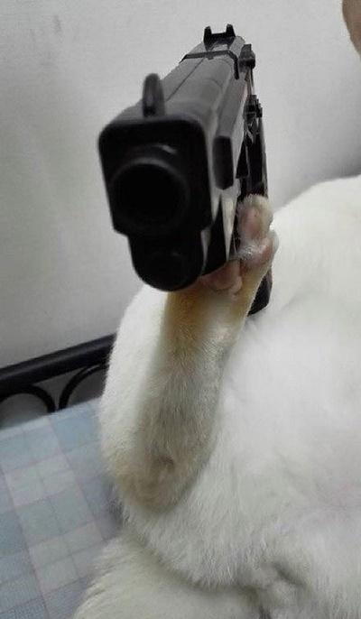 просто кот