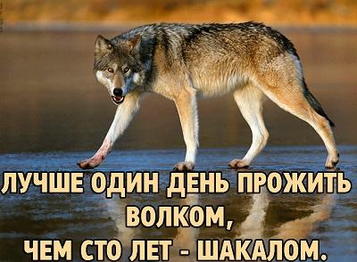 Пословицы и поговорки о волке
