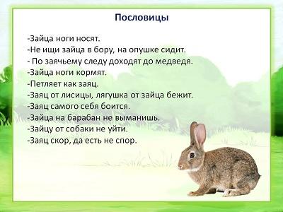 Пословицы и поговорки про зайца