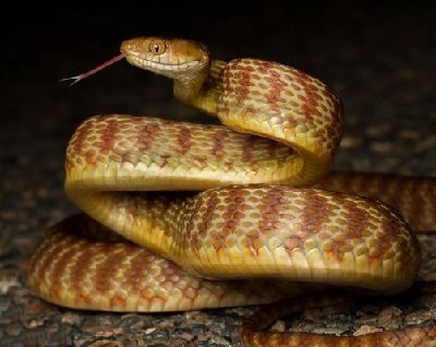 пословицы и поговорки про змею