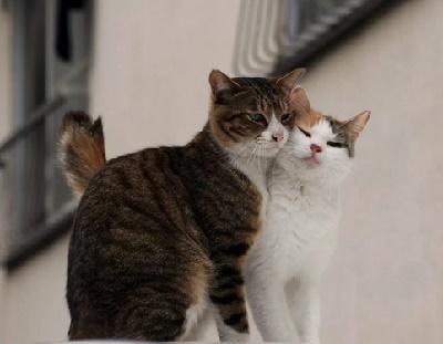 пословицы и поговорки про котов и кошек