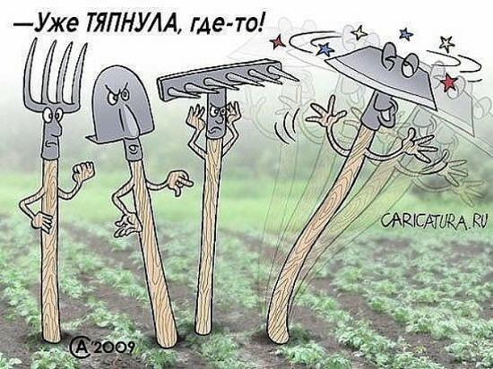 карикатура сегодняшнего дня