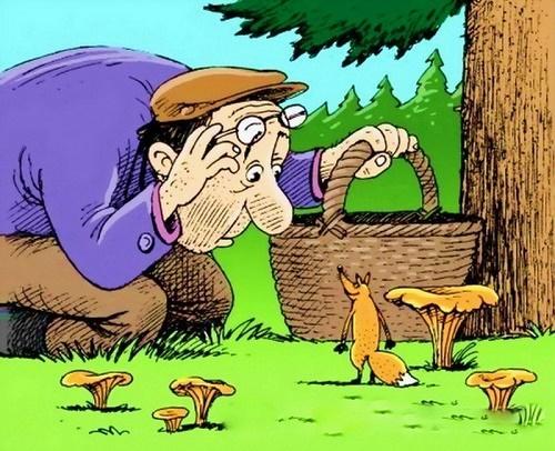 лесные анекдоты