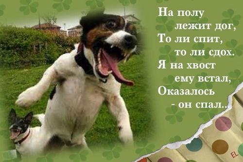 Read more about the article Короткие прикольные стишки о жизни
