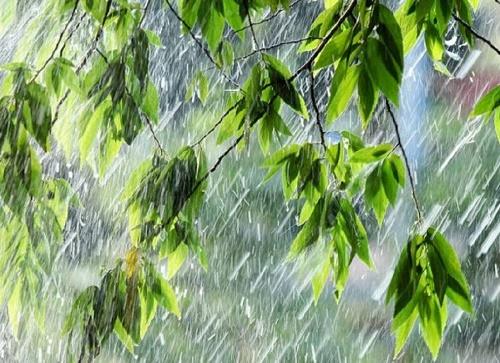 прикольные и не очень статусы про дождь