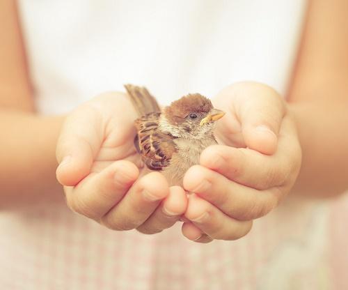 статусы про добро и доброту