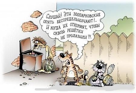 смешная картинка про животных