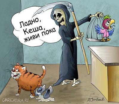 анекдот в картинке про поугая