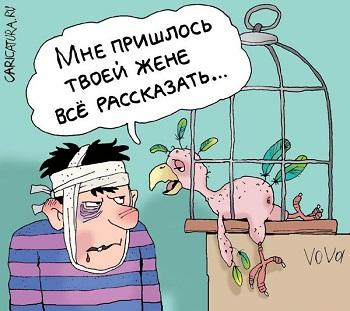 Анекдоты в картинках про попугая