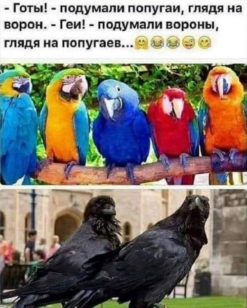попугаи и вороны