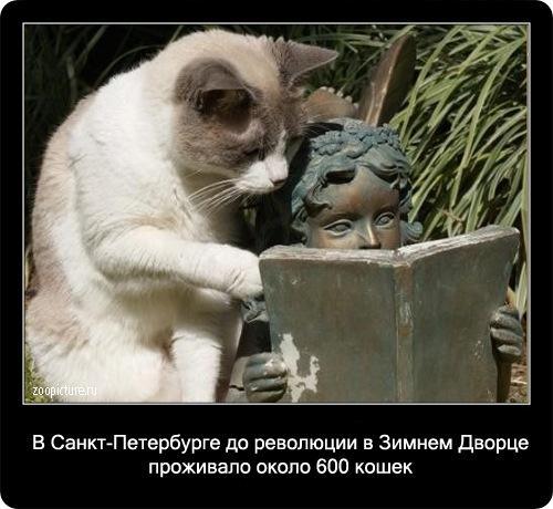 демотиватор про котов и кошек
