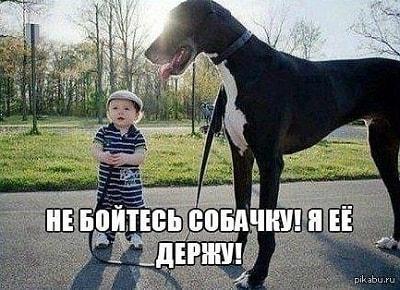 небольшая смешная картинка