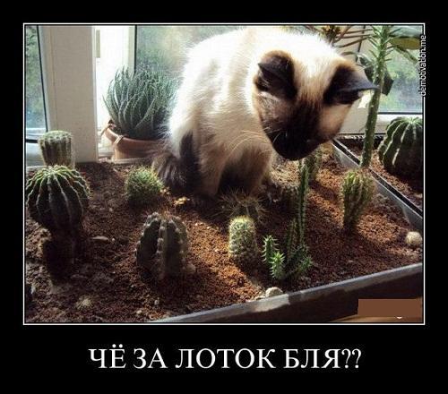 Смешные демотиваторы про котов