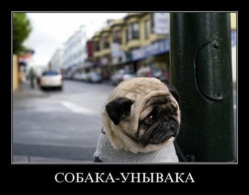 смешной демотиватор про собак