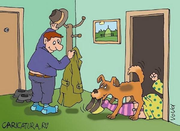 смешные анекдоты про собак