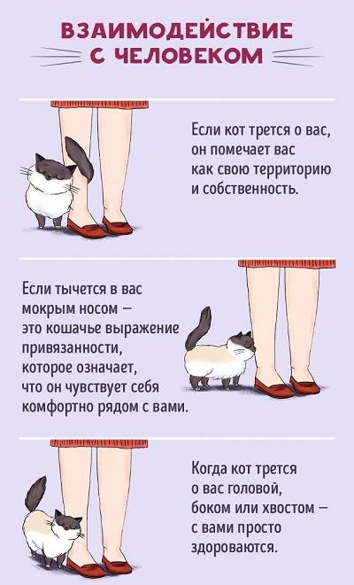 как понять кота