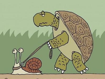 Карикатуры – картинки про зверей
