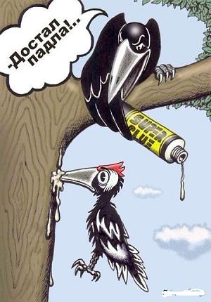 карикатура про птиц