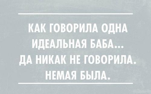 мудрая и смешная цитата