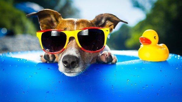 очень смешная картинка про лето
