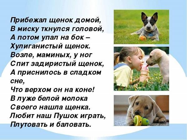 Прикольные стихи про собак
