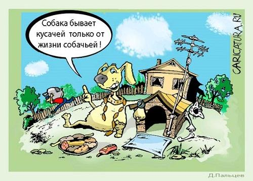 смешная карикатура про собак