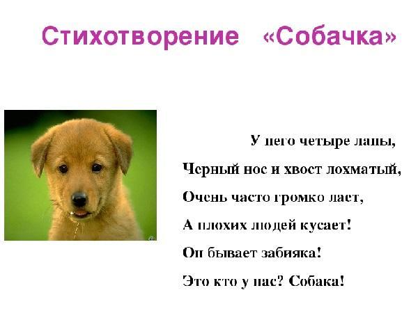 смешные стихи про собак