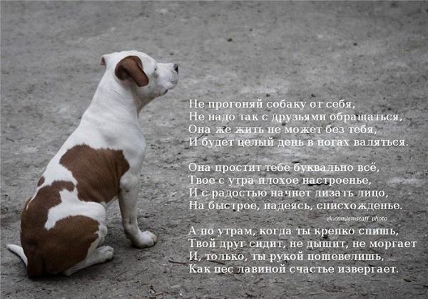 стихи про собачников