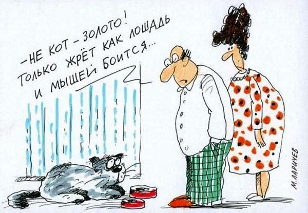 Read more about the article Анекдоты про котов смешные