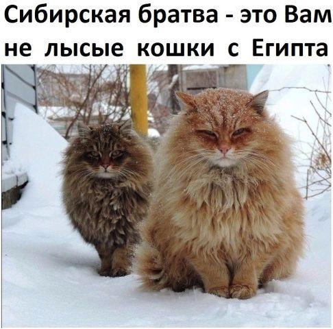 Read more about the article Самые смешные коты на картинках