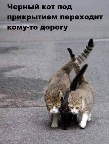 Самые смешные коты на картинках