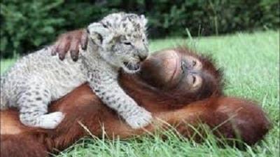 Смешные животные на фото
