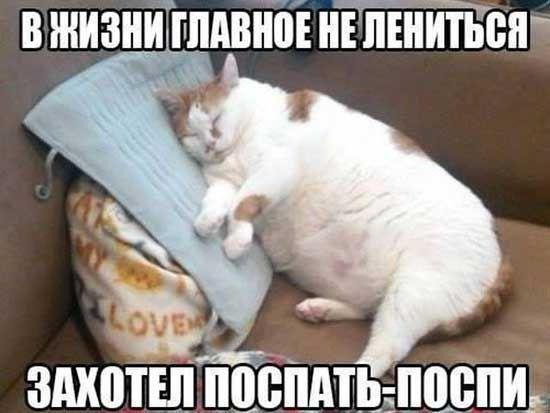 Смешные до слез коты