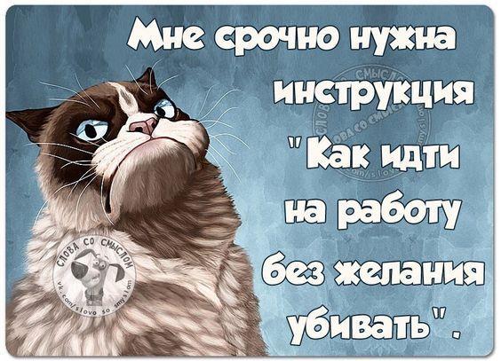 самые смешные коты