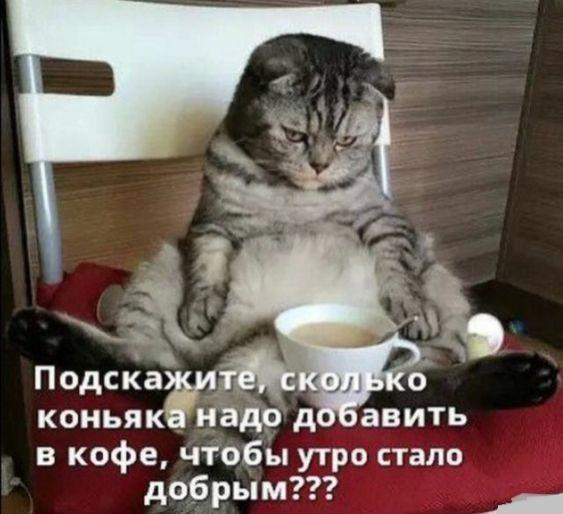 Очень смешные коты