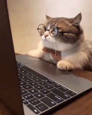 Смешные коты на картинках