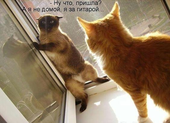 Смешные до слез коты на картинках
