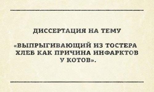Смешные цитаты на картинках