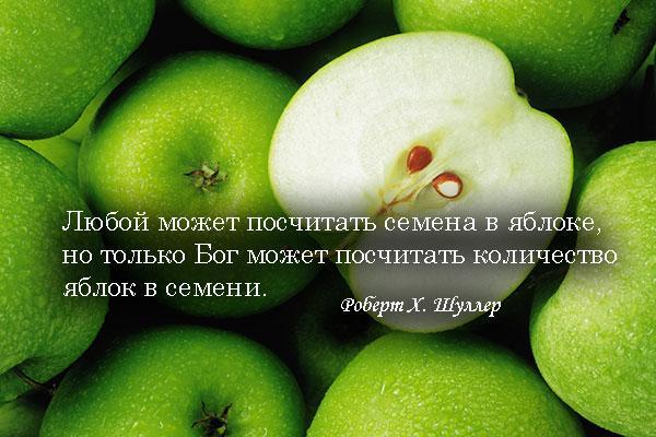 цитаты про яблоки