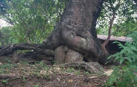 приколы природы