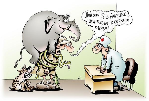 смешные анекдоты про животных