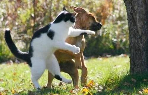 Смешные собаки на фото
