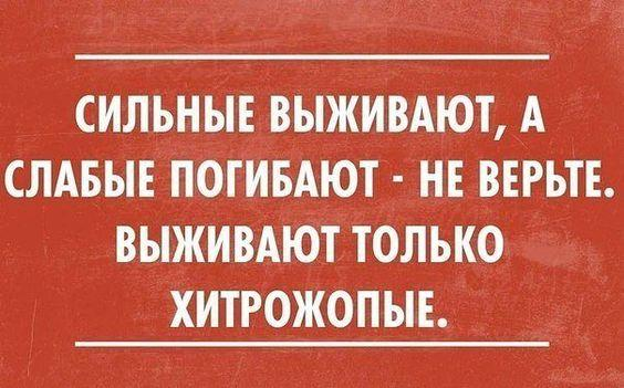 Read more about the article Короткие прикольные и смешные статусы со смыслом