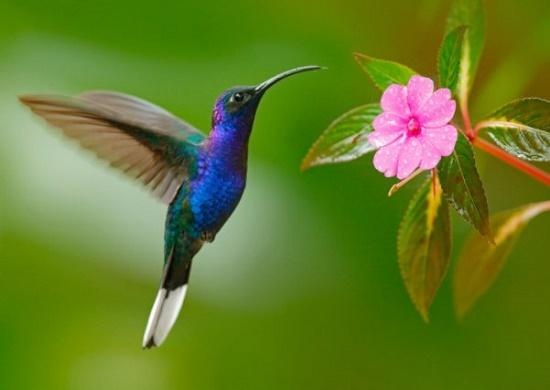 Read more about the article Интересные факты о колибри