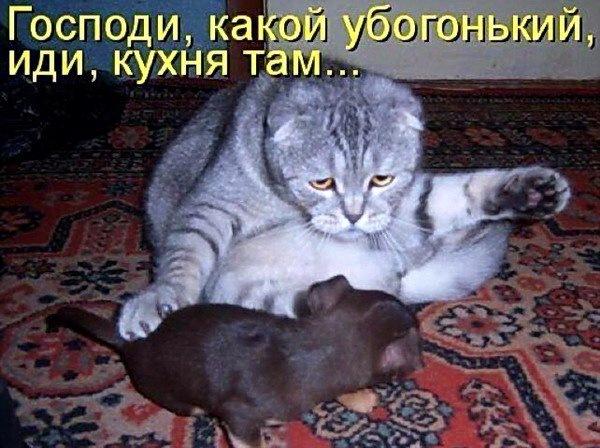 Read more about the article Смотреть забавные картинки с надписями